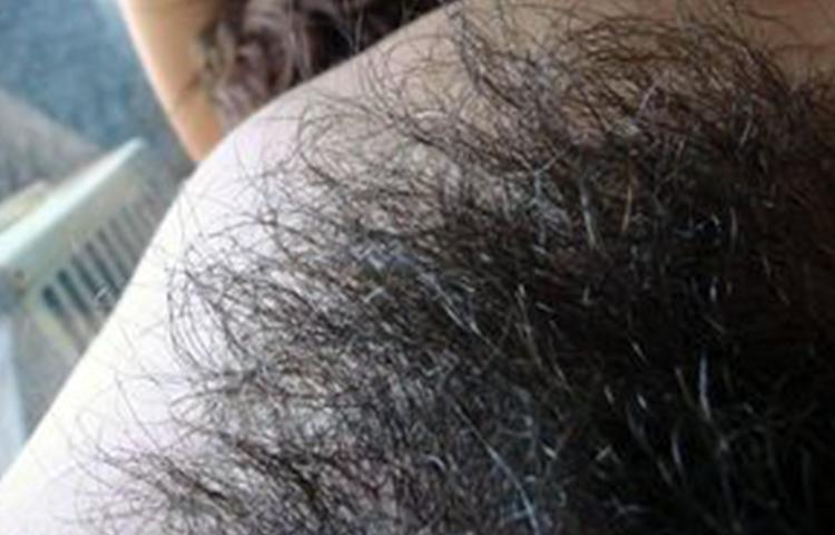 fica pelosa